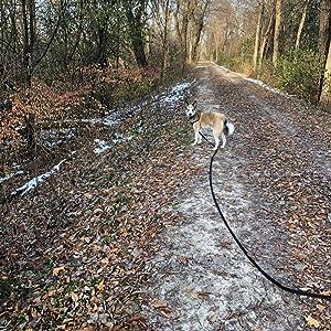 dog webbing leash