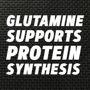 glutamine supports protein