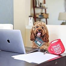 huxley and kent lulubelles power plush dog toy