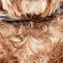 dog brush cat brush cat hair remover cat hair brush dog shedding brush deshedding brush dog comb