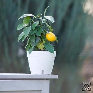 ASTI Planter