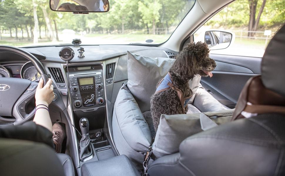 dog car seat in car