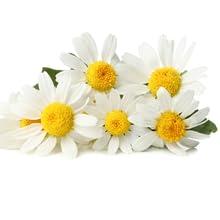 fiori di camomilla al profumo