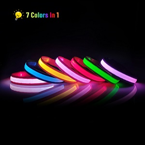 collier chien lumineux rechargeable
