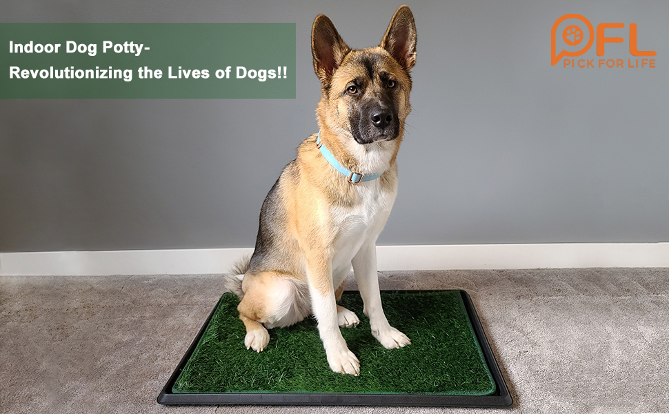 dog potty tray