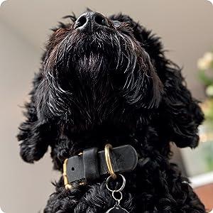 dog new zealand