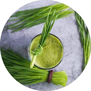 wheatgrass, juice, kapiva, ayurveda, ayurvedic, herbal