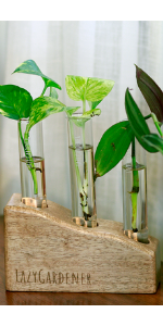 Table top planters, unique decor piece, mango wood pot, glass tube planter, flower vase, pots,