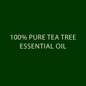 tea tree essential oil maple holistics