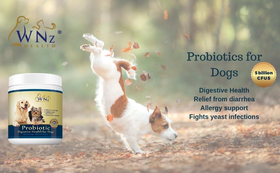 Probiotics for Dogs probiotic powder stop diarrhea constipation digestive health