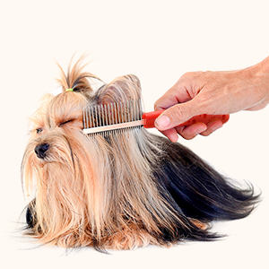 pet grooming clippers