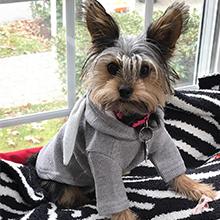 cut hoodies for pet dog