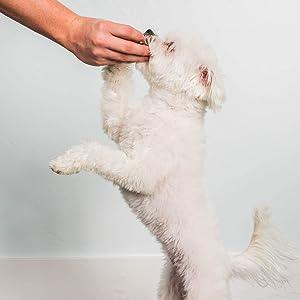 keep dog focused with pupford training treats