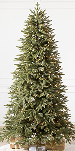 7.5ft Stratford Spruce Clear