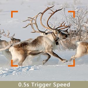 0.5s trigger