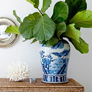 ficus plants, fiddle leaf fig, fast-draining soil, ficus, rubber plants, aroids, pothos