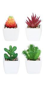 caremic mini potted succulents
