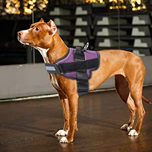 comfort dog harness