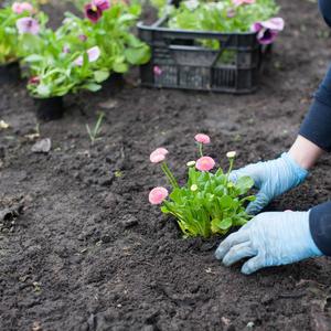 planting flower drill bit
