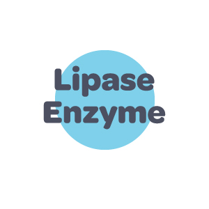 Lipase Enzyme