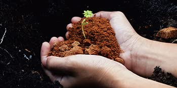 Biojoy Harina de escanda integral BÍO, Triticum monococcum (10 kg): Amazon.es: Alimentación y bebidas