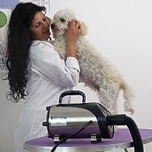 Secador de peluquería para mascotas Profesional para mascotas Secador de manos para mascotas soplado