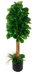 Amazon Com Deluxe 72 Premium Fiddle Leaf Fig Artificial Tree Fiddle Leaf And Tropical Grass Foliage In 10 Base 12 Plant Pot Skirt Kitchen Dining