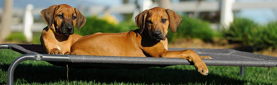 Treat Your Pets to Deep, Luxurious Sleep!