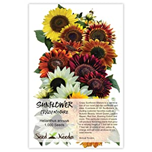 crazy sunflower seeds for planting
