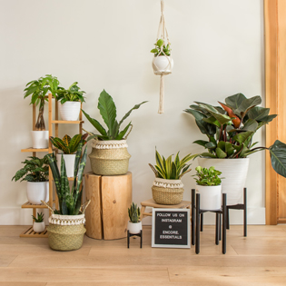 Encore Essentials plant stands and hangers for home and office