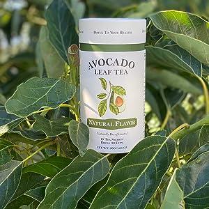 Avocado Leaves amp; Tea