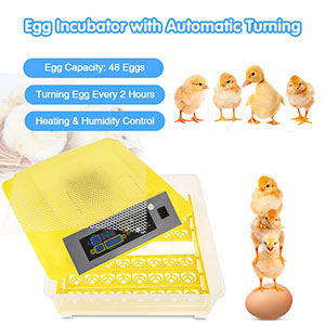 Egg Incubator, 56 Eggs Digital Incubator with Fully Automatic Egg Turning and Humidity Control