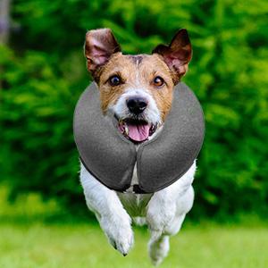 pet inflatable collar