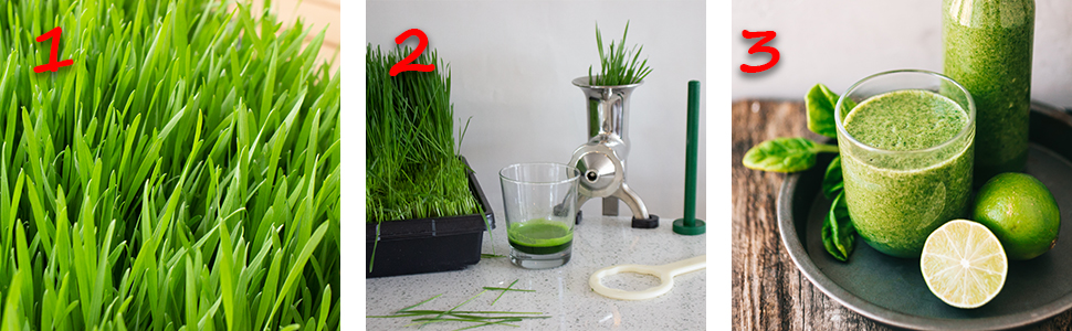 Rye grass, a juicing kit, and a lime and wheatgrass smoothie.