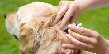 Dogs; cats; kitten; puppies; itching; tick spray; anti tick; tick; fleas; tick shampoo; dogz & dudez