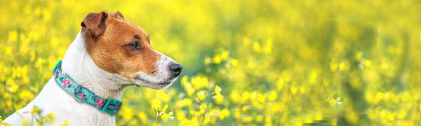 SPRING FLORAL DOG COLLAR