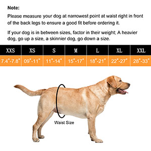 male dog belly bands