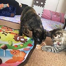 猫 猫壱 キャッチ・ミー・イフ・ユー・キャン2 電動おもちゃ くるくる回る 単3電池 夢中 可愛い 一人遊び