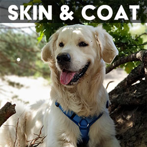 skin and coat supplement for dogs