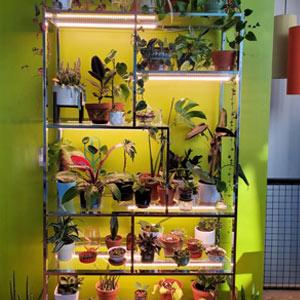 plant lamping