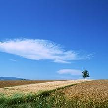 十勝の麦畑