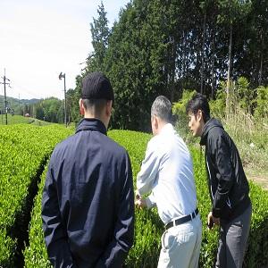 Tea farm green tea Japanese Sencha Roasted green Tea Hojicha Twig Loose Leaf Green Tea Karigane tea