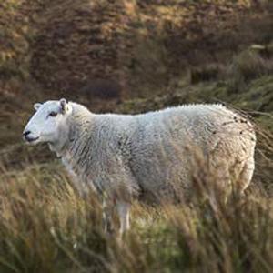 Gorro de punto de lana de merino, gorro de mujer con forro polar, gorro cálido para hombre, gorro de punto