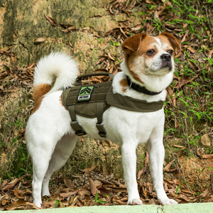 small dog harness for walking