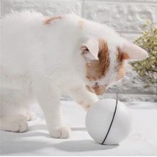 cat playing ball 2
