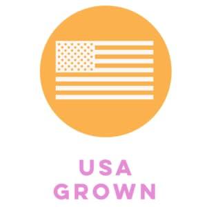 usa grown pumpkin seeds, sprouted seeds, sprouted buckwheat, raw buckwheat, organic buckwheat, raw