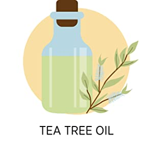 Tea Tree Oil in a bottle extracted from Tea Tree leaves