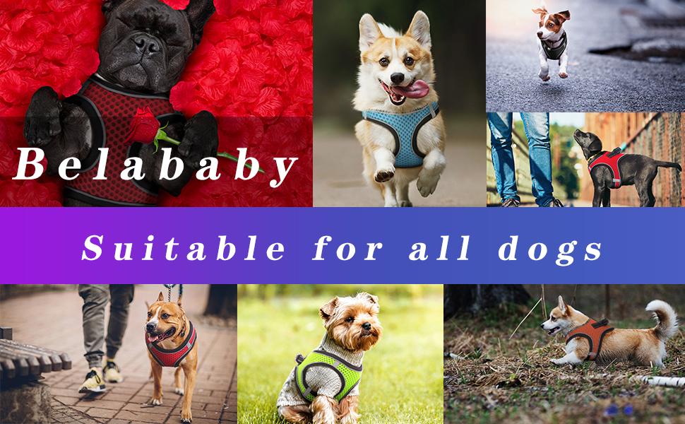 dog harness no pull dog harness puppy dog harness julius k9 dog harness medium medium no pull