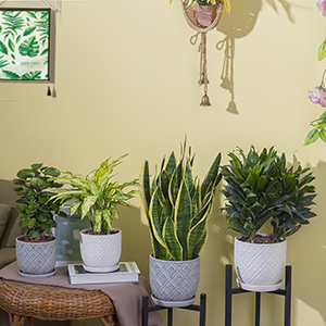 pots for plants indoor