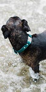 Personalized Waterproof Dog Collar, Odor Resistant, Built-in Custom Laser Engraved ScruffTag